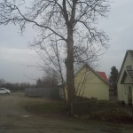 Billeder fra vores træfældningsarbejde